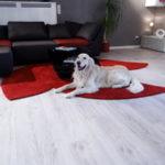 Teppich Shape Edition - Trebes Raumausstattung